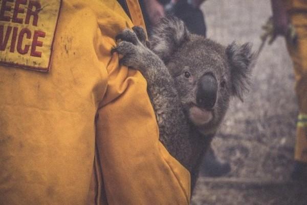 WIRES Australian Wildlife Rescue Donation Class